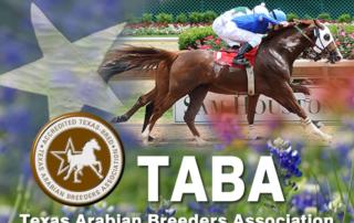 Racing Terms - Arabian Racing of California